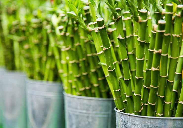 Bambus Einpflanzen Garten Und Landschaftsbau Wesserling Hamburg
