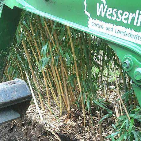 Bambus entfernen Hamburg
