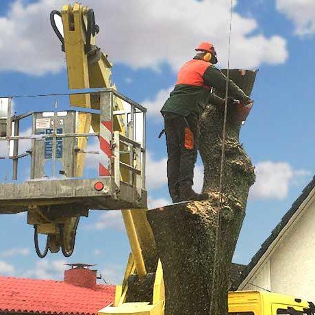 Baum fällen und Entsorgung von Totholz in Hamburg