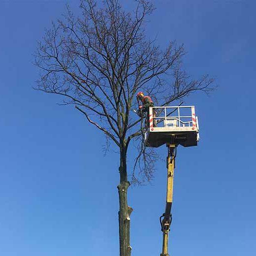 Baumarbeiten in Baumkrone mit Steiger